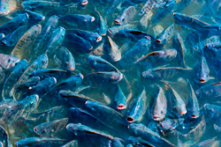 Очистка воды для рыбной фермы